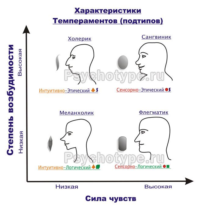 Общая характеристика темпераментов